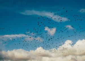 """Campaña """"día mundial de las aves migratorias"""""""