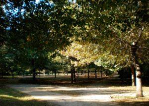 El Parc de la Rambleta i el Molí del Tell