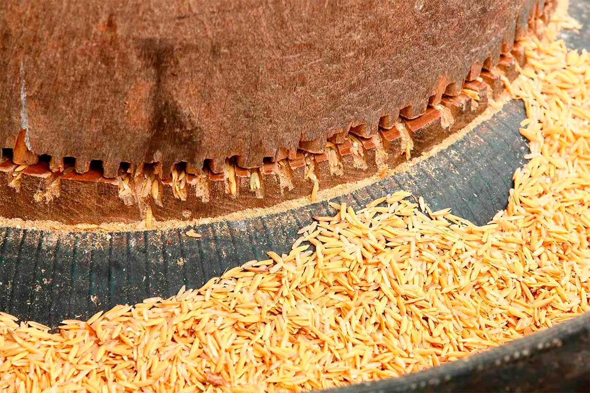L'arqueologia industrial d'un antic molí d'arròs